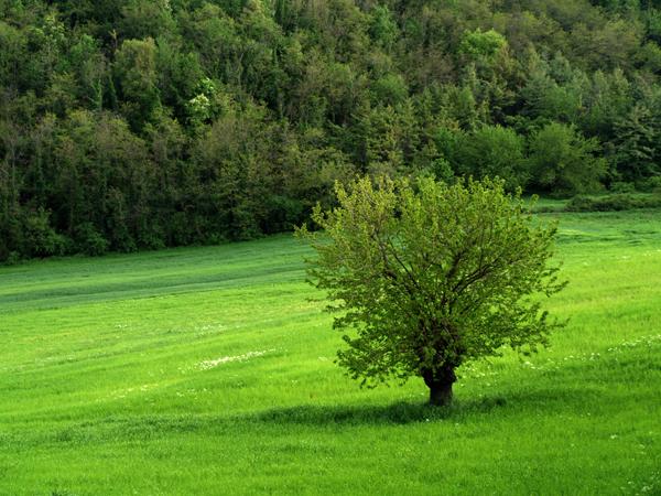 verde di significato66
