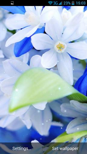 免費下載個人化APP 夏季花卉动态壁纸 app開箱文 APP開箱王