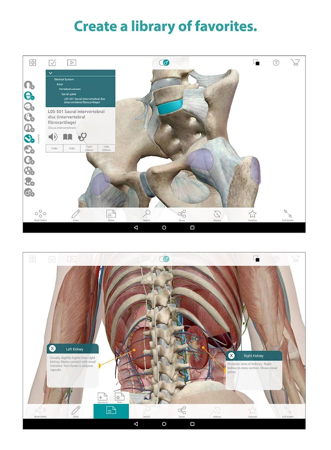 Human Anatomy Atlas- screenshot