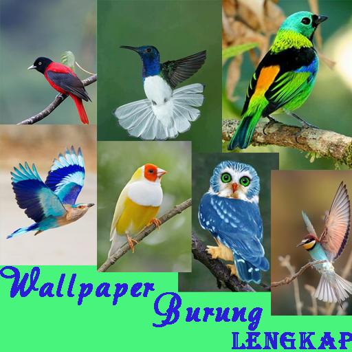 Unduh 104 Foto Gambar Burung Merpati Sangat Indah  Terbaik Free