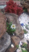 Photo: дриада восьмилепестная