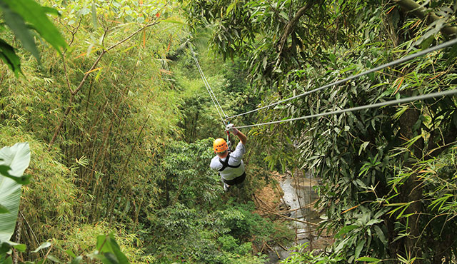Zipline Through the Rainforest – Antigua | Princess Cruises