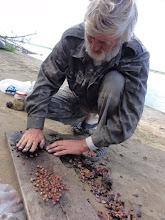 Photo: Кедровые шишки мы обжигали на костре, а потом прокатывали на доске и выбирали орешки.