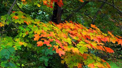 Photo: Early Fall