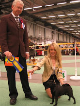 "Photo: Finnishing his Swedish Champion title at the big Internationall show ""Stora Stockholm"" Dec-08"