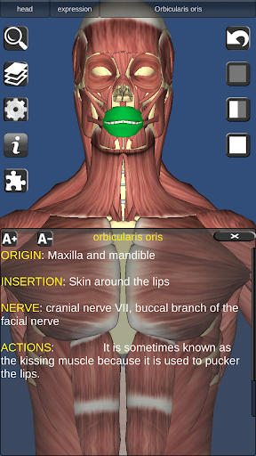 3D Bones and Organs (Anatomy) 3.1.0 screenshots 5