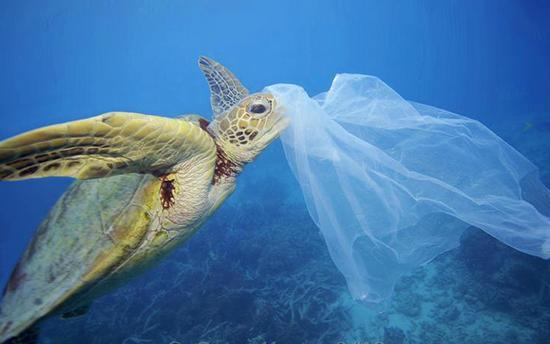 tortuga plastico mar.png