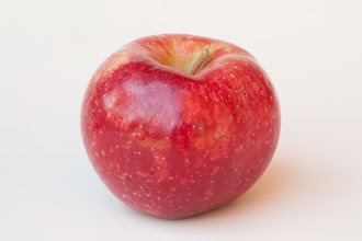 "Photo: 'Keepsake' apple developed by the University of Minnesota and released in 1978. by the U of MN Agricultural Experiment Station.  Project #21-016, ""Breeding and Genetics of Fruit Crops for Cold Climates."""