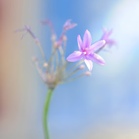by Derrick Huynh - Nature Up Close Flowers - 2011-2013
