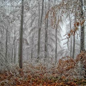 by Olivera Prelevic Tanasic - Nature Up Close Trees & Bushes (  )