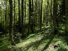 Photo: La forêt de l'Aigoual