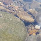 unidentified fishes