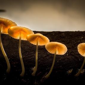 by Joey Casalan - Nature Up Close Mushrooms & Fungi