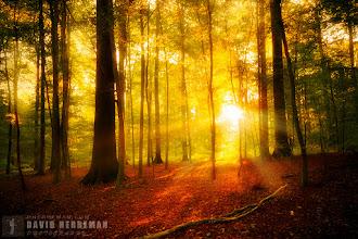 Photo: Morning Light