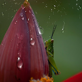 Water Drops by Alim Sumarno - Nature Up Close Other Natural Objects
