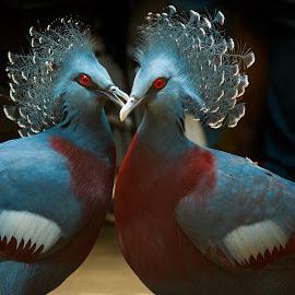 In Love by Rananjay Kumar - Animals Birds ( bird, bird canon, birds )