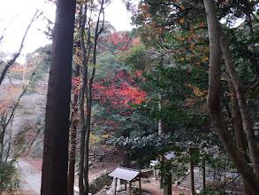 神社入口の紅葉