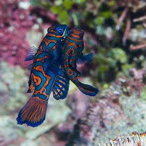 Lembeh-2007-KBR-Diving-108.jpg