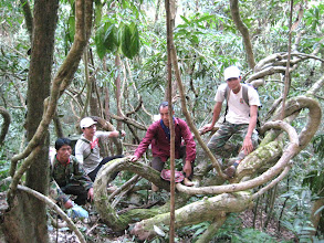 Photo: Jungle forest on 3 days trek-3 Days Nam Ha Jungle Camp in Luang Namtha, Laos