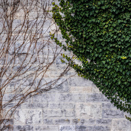 The Upside Down by Manasvini Munjal - City,  Street & Park  City Parks ( vines, green, brown, leaves, wall )
