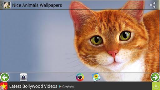 娛樂必備免費app推薦|漂亮的動物壁紙線上免付費app下載|3C達人阿輝的APP