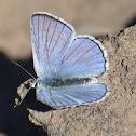 Blue copper