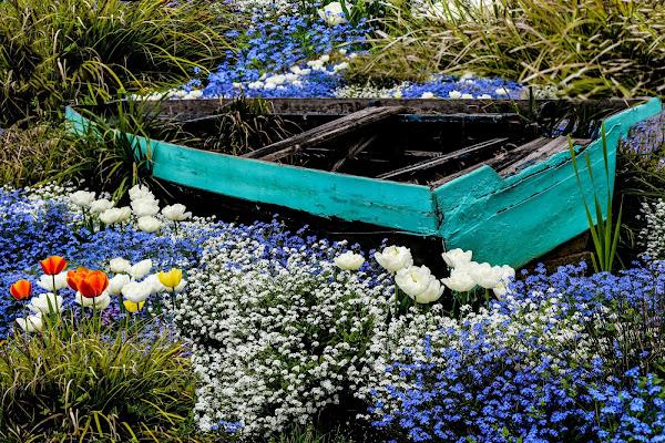 Into the spring di Alda_B