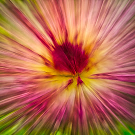 by Jim Jones - Abstract Light Painting ( art, flowers, color, abstract, colorful )