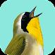Song Sleuth: Auto Bird Song ID w/ David Sibley