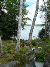 Photo: steps to lake view