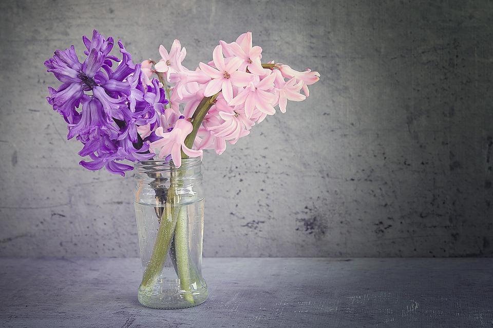 hyacinth-1359538_960_720.jpg