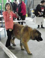 Photo: Holly-Dog des Vallons de Lamartine