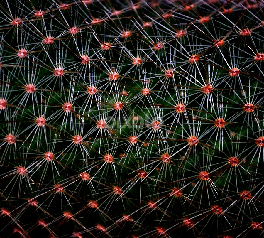 by Mihaly Istvan - Nature Up Close Other plants