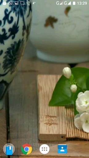 茶播录像的墙纸
