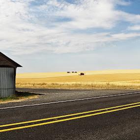 Golden Fields by Dennis Mai - Landscapes Prairies, Meadows & Fields ( farm, grassland, countryside, road )