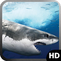 Shark Wallpaper icon