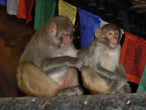 Photo: 17. Svayambhu Mahachaitya