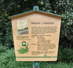 Photo: im Bärlauch-Land