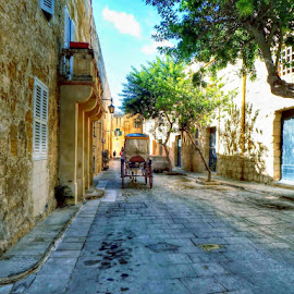malta by Betty Taylor - City,  Street & Park  Neighborhoods ( horse, street, malta, roads, street photography )