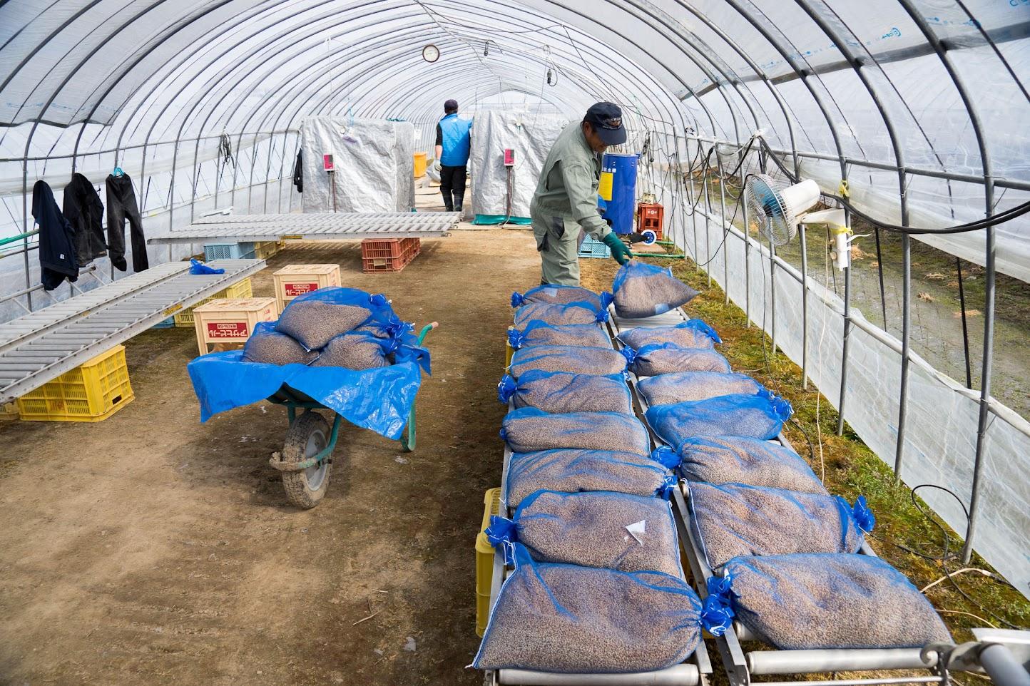 乾燥後の種籾