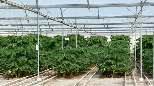 Las exportaciones agroalimentarias crecen un 4,5% en este primer cuatrimestre