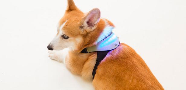 Напечатанная на 3D-принтере шлейка Inupathy поможет понять эмоции собак