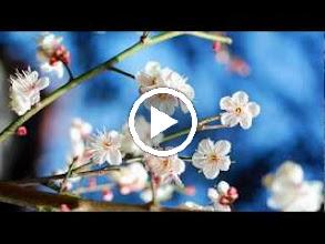 Video: A. Vivaldi  Era la notte quando i suoi splendori [cantata] for soprano   b.c. (RV 655) - Part II -