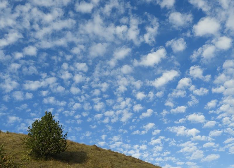 E l'albero disse: cielo a pecorelle ..........e io mi disseto. di claudio_sposetti