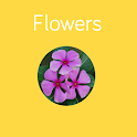 Flowers Preschool Toddler