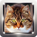 Kitten and Cat Sounds icon