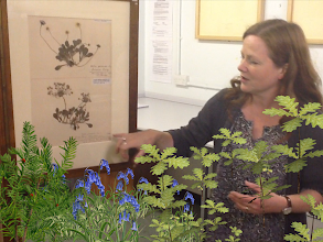 Photo: Donna Young, Herbarium Curator, World Museum Liverpool