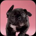 Puppy Shake Live Wallpaper icon