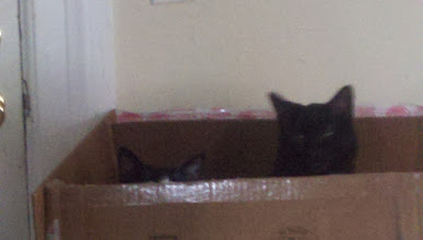 Photo: What is it with cats and boxes?