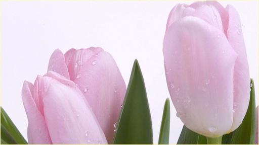 壁紙HDの花